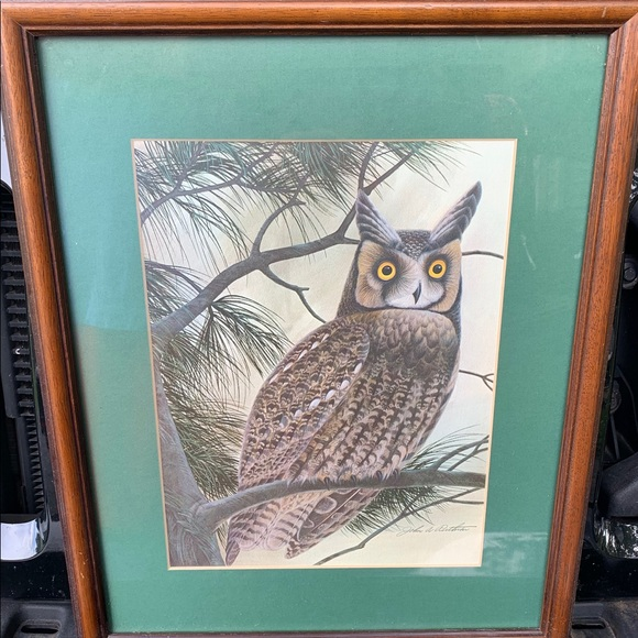 Vintage Other - Long Eared Owl Print By John A Ruthven